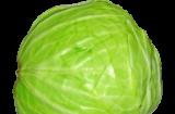 Лечение капустой